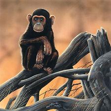 Jan Weenink: Chimpanzee Keilrahmen-Bild Leinwand Affen