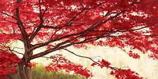 Leonardo Bacci : Acero bastidor de cuña - Imagen Lienzo árbol rojo Árboles