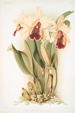 Cattleya Dowiana Aurea by Joseph Sander Floral Print