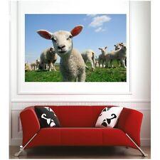 Affiche poster agneaux  12613267 Art déco Stickers