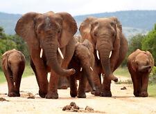 2790V -Afrika Sonnenuntergnag Safari Wilde Tiere Bild VLIES Fototapete-GIRAFFEN-