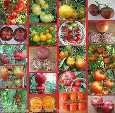 Tomate * tomate para cortos verano * kältetolerant * 10 semillas de semillas de tomate
