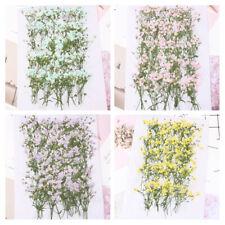 30 STÜCKE Getrocknet Schleierkraut DIY Dekoration Natürlich Blumen Sammlungen