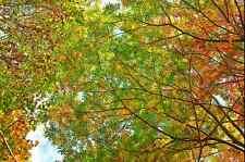 3D Frische Frühlingsblätter Fototapeten Wandbild Fototapete BildTapete FamilieDE