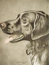 Jean Bungartz NEWFOUNDLAND NEWFOUNDLANDER 1890 Antique Dog Engraving Art Matted