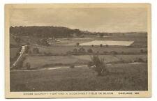 OAKLAND MD Buckwheat Field in Bloom Vtg Farm View PC