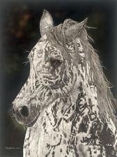 """American Horse"" Judy Larson Fine Art Giclee Canvas"