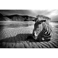 Quadro Stampa su Pannello in Legno MDF Zebra