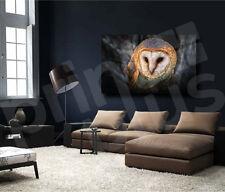 Australian Masked Owl Bird Canvas Art Poster Print Wall Decor