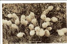 Squaw Grass  Mt. Hood, Oregon vintage postcard