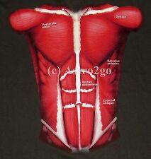 MUSCLES-Muscular System 2 sided Science Biology Anatomy Teacher T shirt XL-3XL