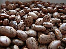 Heirloom Pinto Bean Bush OP  Bean Seeds 1600 seeds per pound