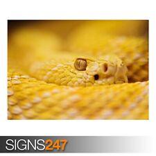 Albino Rattlesnake (3400) poster foto print arte * Tutte le Taglie-seconda metà prezzo!