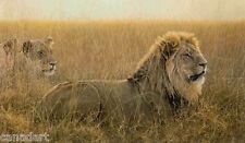 Robert BATEMAN Lions In The Grass GICLEE CANVAS Ltd art MINT COA