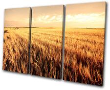 Landscapes Corn Field TREBLE DOEK WALL ART foto afdrukken
