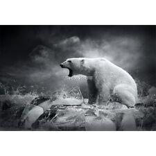 Stickers muraux déco : Ours Noir et Blanc 1628