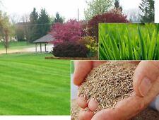 TOUGH HARD WEARING LAWN GRASS SEED CREATE REPAIR ENHANCE MULTI PURPOSE