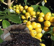 GIALLO Bourbon Chicchi Di Caffè 100% Arabica Bean o macinato World Coffee