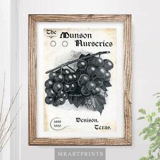 VINTAGE KITCHEN FRUIT Art Print Poster Black White Grapes Wine Vineyard Farm
