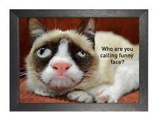 Chat 20 superbe petit chiot affiche douce Animal Mignon drôle visage Kitty IMAGE