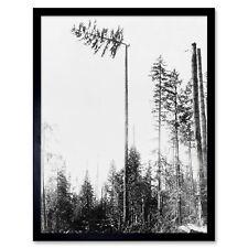 LANDSCAPE FOREST TREE PINE LOGGING TIMBER USA Vintage Canvas art Prints