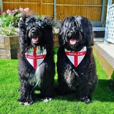 ENGLAND/ ST GEORGES CROSS/FOOTBALL EMBROIDERED DOG BANDANA, 6 SIZES