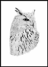 Kids Children PostersWildlife Portrait Art Print #30 A3 size Owl