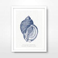 "VINTAGE SHELL ILLUSTRATION SEASIDE NAUTICAL ART PRINT Decor 8x10 12x16 16x20"" in"