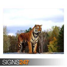 Regal Bengala (3779) Cartel De Animales-imagen arte cartel impresión A0 A1 A2 A3 A4