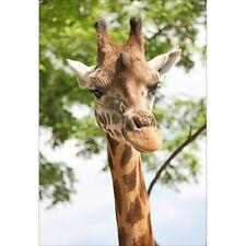 Stickers muraux déco : girafe 1315
