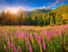 Fototapete Alpen Berge Blumen Sommer - Kleistertapete oder Selbstklebende Tapete