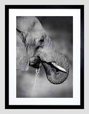 AFRICAN ELEPHANT DRINKING BLACK WHITE BLACK FRAMED ART PRINT PICTURE B12X8677