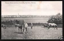 Manton nr Marlborough. Famous Mares & Foals, Stud Farm.