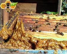 RAW PROPOLIS from bee hive 100% ORGANIC propóleos Season 2017 Fresh