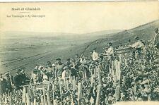 Champagner, Moet et Chandon, Arbeiter im Weinberg, um 1910