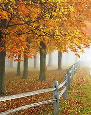 "Silver METALLIC (etc)  Photograph ""Autumn Morning Fog"" Decor Wall Art Picture"