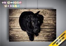 Poster Chiot Labrador Noir