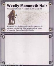 veritable poils de Mammouth laineux ( 004)