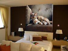 3D Beautiful cat 1 WallPaper Murals Wall Print Decal Wall Deco AJ WALLPAPER