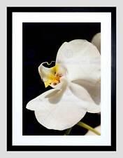 White Orchid Flor Floración marco negro montaje de imagen de impresión arte enmarcado B12X9219