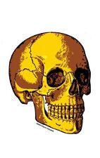 Cool GOLD HUMAN SKULL KULTURE VINYL Lowbrow CAR STICKER/DECAL by KALYNN CAMPBELL