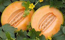 Cantaloupe Seeds, Delicious 51 Melon, NON-GMO, Variety Sizes, FREE SHIPPING