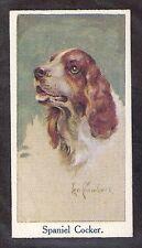 1924 Uk Leo Chambers Dog Art Head Moustafa Cigarette Card English Cocker Spaniel