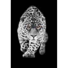 Adesivi murale decocrazione : leopardo bianco 1364