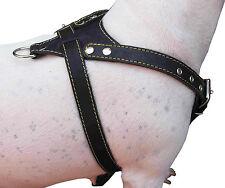 "Genuine Leather Dog Harness, Medium. 25.5""-29"" Chest 1"" Wide, Amstaff, Pitbull"