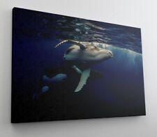 Fotografie Wal Meer Tier Leinwand Canvas Bild Wandbild Kunstdruck L1807