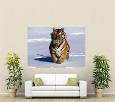 Tigre Siberiano Gigante 1 pieza de arte de pared Cartel An115