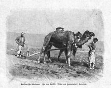 TURKMENISTAN**TURKMENISCHER ACKERBAUER**1900