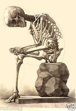 Vintage/Art Print/Poster/ Sitting Skeleton  C. 1867