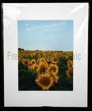 Golden Sunflowers #2 Limited 1st Edition Photo 1/100 KS